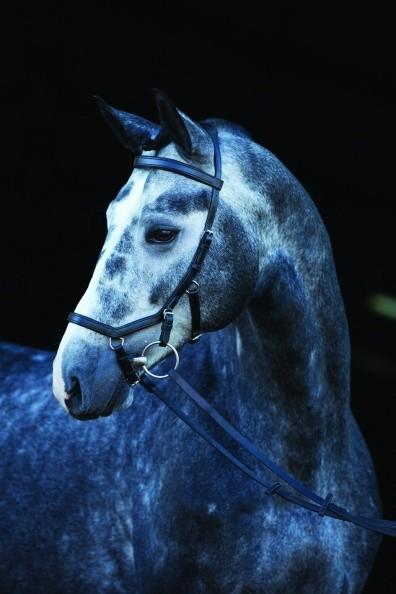 Horseware Rambo Micklem Competition Bridle - pferdefreundlicher Zaum / auch zum Probieren!