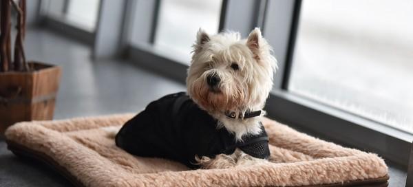 Torpol Hundematte mit Magnetfeldtherapie