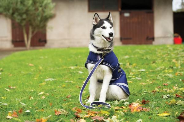 Horseware Amigo Waterproof Dog Rug 100g